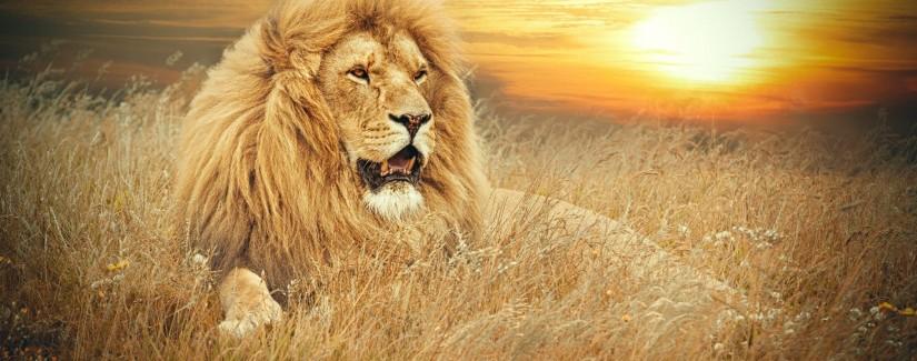 """Il """"leone"""" e la paura"""