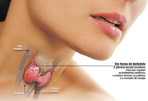 glandula-tiroide