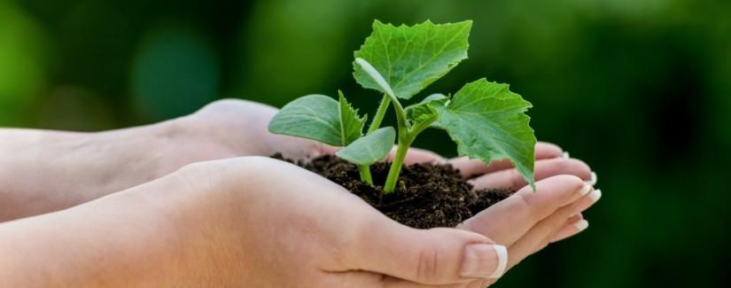 Plantando a Fé